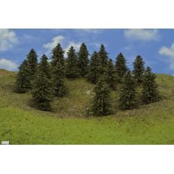 40B1HO-stromky,borovice,výška 9-11cm,16ks