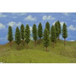 53Z2HO-stromky,listnaté,výška 17-18cm,12ks