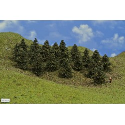 38B1TT-stromy,borovice,výška 5-6cm, 20ks