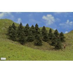 38B1N-borovice,výška 5-6 cm,20ks