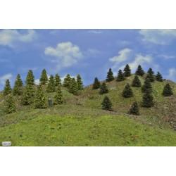 LES HO24, borovice, modříny, 3-5 cm,30ks