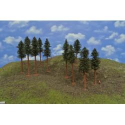 42B1KTT-borovice s kořeny,výška 14-17cm, 10ks
