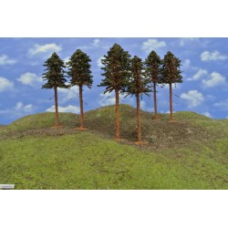 43B2KHO-borovice s kořeny,výška 18-20cm,6ks