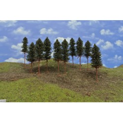 N - borovice,výška 15-17cm,20ks (42/B1//N)
