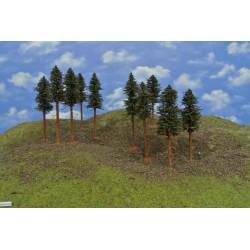 42B1KHO-borovice s kořeny,14-17cm,10ks